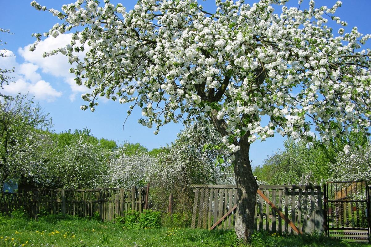 bomen, bloemen en planten in de tuin