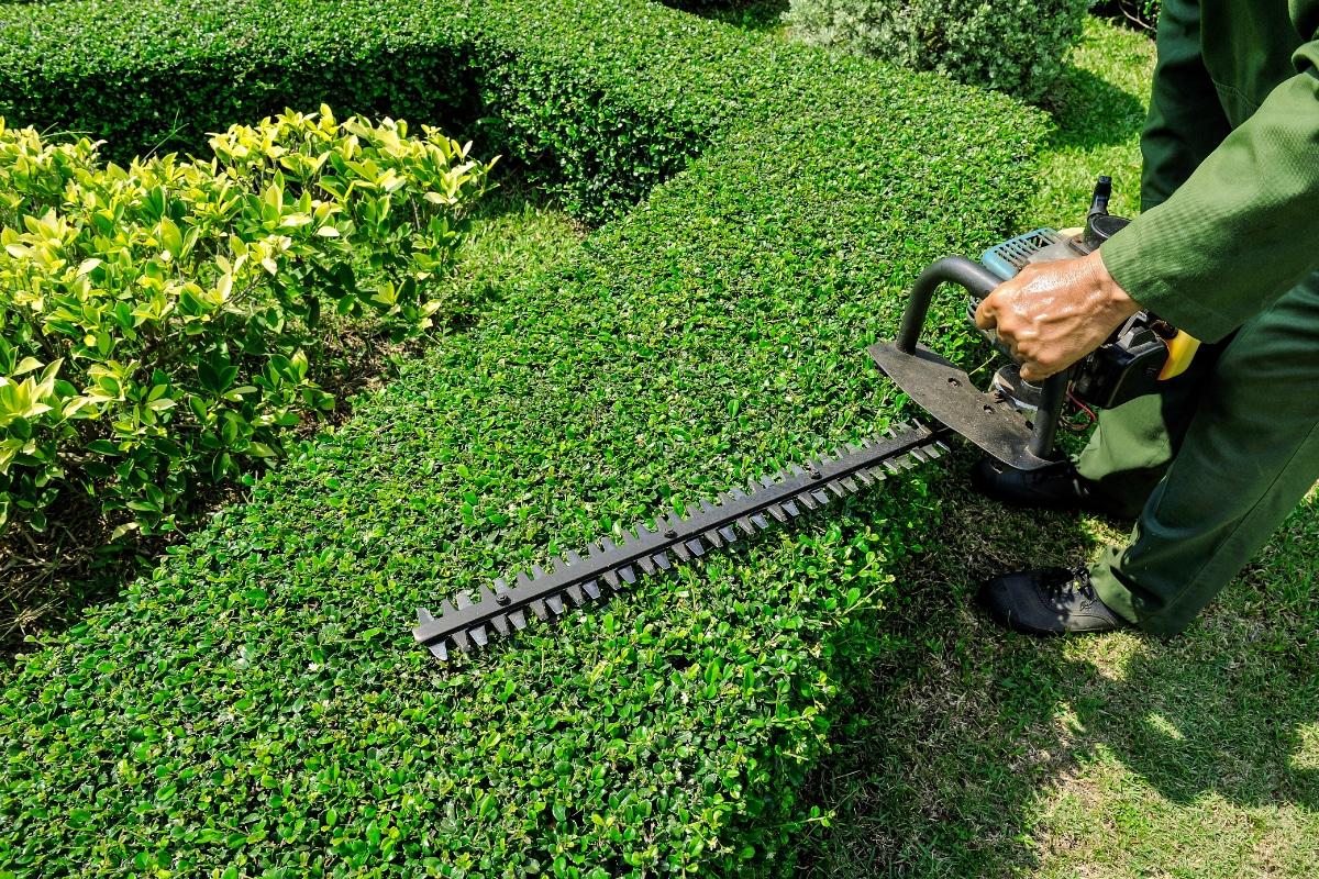 tuinonderhoud voorbeeld haag snoeien